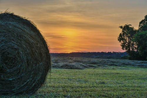 Picture of Hay in Sunset